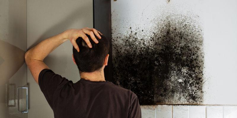 Mold Damage Repair in Cornelius, North Carolina